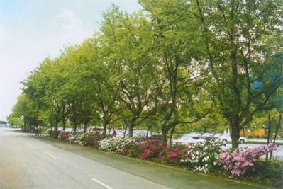 自然景观 武汉园林景观设计 绿化工程施工 屋顶花园 花卉
