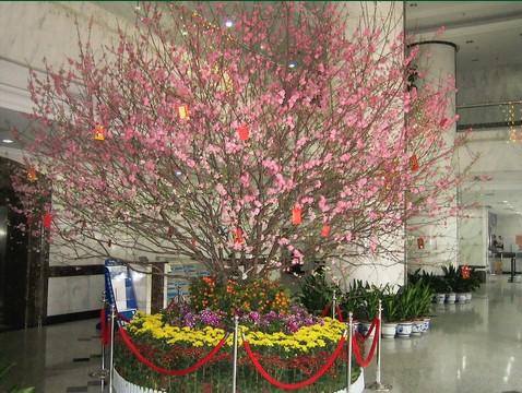 植物造景图片 武汉园林景观设计 绿化工程施工 屋顶花园 花卉